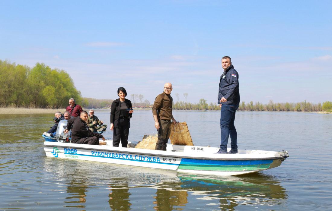 У Дунав код Новог Сада постављено 90 гнезда за мрест смуђа